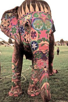Hiya gorgeous elephant!  Painted for the Rajasthan Elephant festival in Jaipur, India the night for Holi Phagwa