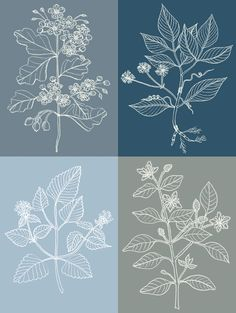 Herbs. Embroidery Pattern?