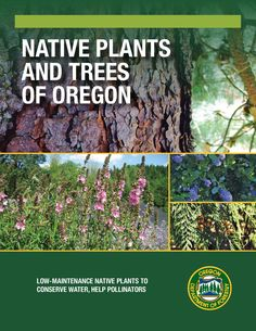 Native plants and trees in Oregon : low-maintenance native plants to conserve water, help pollinators, by the Oregon Department of Forestry, Urban & Community Forestry Program