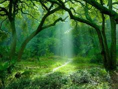 Green the harmony of nature ~ the secret path