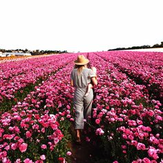 """""""Miles and miles of ranunculus flowers. I'll take it."""