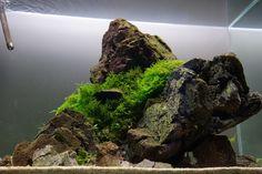 Aquascape by Zero-Fact