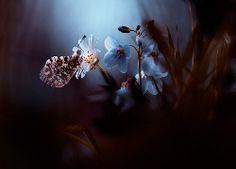 Kwiaty, Motyl, Rozmyte, Tło