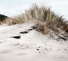 Sand Dune 8 X 10 photograph Beach art fine art by GwenEllenStudio Dune, A Well Traveled Woman, House By The Sea, Water Element, Am Meer, Ciel, Sea Shells, Holland, Surfing