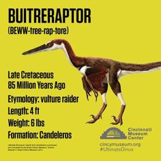 Buitreraptor was a small, turkey-sized dinosaur. Unfortunately, it probably wouldn't have made a very good Thanksgiving dinner. Discovered in Argentina, this dromaeosaur is believed to be a feathered, but flightless dinosaur. Its discovery and scientific analysis led to some interesting questions about how and when bird began to fly.   Collect its Ultimate Dinosaur Trading Card this week in the exhibit. #CincyRAWRS