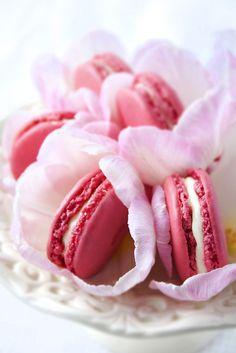 pink macaroons in petals
