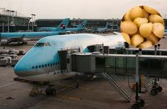 Korean Air VP reportedly orders plane back to gate over flap over nuts. Korean Air, Plane, Education, Learning, Airplane, Teaching, Aircraft, Onderwijs, Studying