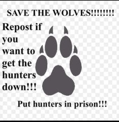 SAVE THE WOLVES!!!!! Get the hunters down!!!!! And let the wolves run free!!!! Stop shooting wolves!!!!! That's not good or right!!!!!