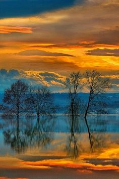 Reflections on water in golden sunset.Tree Reflections on water in golden sunset. Beautiful Sunset, Beautiful World, Beautiful Images, Nature Pictures, Cool Pictures, Landscape Photography, Nature Photography, Jolie Photo, Amazing Nature