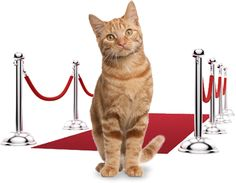 This is SOO fun guys. Please vote!!// Catdance Finalist 2014: The Inheritance
