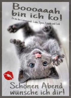 Ich bin k o ; Night Wishes, Day Wishes, Animals And Pets, Funny Animals, Christian Dating, Good Morning Good Night, Cat Boarding, E Cards, Man Humor