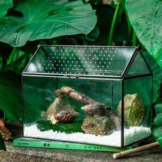 large house shape snail terrarium