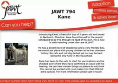 Still wanting a human to look after Japanese Akita, Can You Help, 5 Year Olds, Make Sense, Beautiful Boys, Trust, Life, Cute Boys