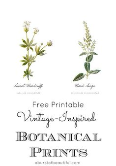 Free Vintage Inspired Botanical Printables - A Burst of Beautiful