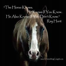 inspiring horse quotes. www.ranchseeker.com they know when you don't know!