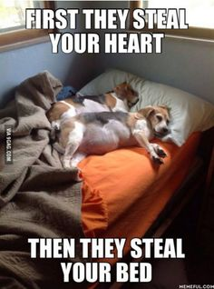 So true. Sadly, I do not have any puppies due to my apartment lease. :( If I did have a pup, I would most definitely let him/her sleep on my bed. However, when I visit my brother's dog, I allow him to sprawl on the small hide-a-bed while I scrunch. His comfort is more important than mine.