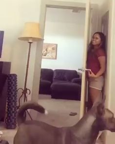 Trendy Dogs And Puppies Funny Hilarious Humor Cute Funny Animals, Funny Animal Pictures, Funny Cute, Funny Dogs, Hilarious, Funny Memes, Super Funny, Funny Pet Videos, Funny Animal Gifs