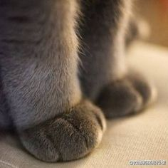 Love these adorable sweet paws!  <3