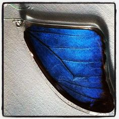 Earrings made of butterfly wings -- you can find them in The Garden Shop at Lewis Ginter Botanical Garden.
