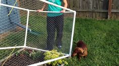 We made a fence to keep our dog out of the garden. We got creative and designed it in a way where the fence actually pivots vertically on the short sides of ...