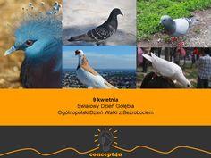 kalendarz nietypowych świąt na kwiecień. www.concept4u.eu.