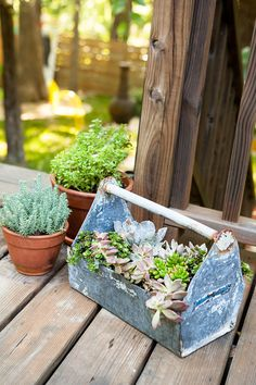 "Clark loves fleshy-leafed succulents for their unusual shapes and for the fact that ""they're almost impossible to kill."" The handle on this vintage toolbox makes relocating them to a sunnier spot a snap.  - GoodHousekeeping.com"