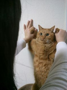 """cat says.... """"Why are you missing with me?"""" ♥"""