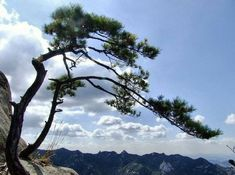 Pine Tree, Scenery, Earth, Mountains, Nature, Travel, Forests, Naturaleza, Viajes
