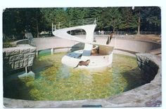 """""""Otters in Stanley Park Zoo - Vancouver, B. Stanley Park Vancouver, Vancouver Bc Canada, Downtown Vancouver, Vancouver Island, West Coast Canada, Old Photography, Most Beautiful Cities, Historical Pictures, Otters"""