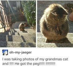 - your daily dose of funny cats - cute kittens - pet memes - pets in clothes - kitty breeds - sweet animal pictures - perfect photos for cat moms Funny Animal Memes, Cute Funny Animals, Cute Baby Animals, Cat Memes, Funny Cute, Animals And Pets, Cute Cats, Cute Creatures, Crazy Cats