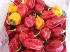 #peperoncino #piccante #habanero #buongustaidicalabria #italia