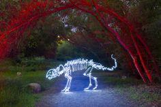 Skeletal Light Paintings by Darren Pearson