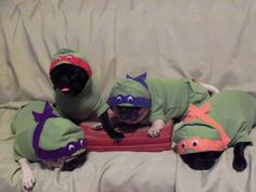 Teenage Mutant Ninja Pugs!! I can NOT believe how adorable these little guys are!!!