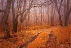 The autumn wood fell asleep in morning fog