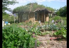 (Cob House, Rutledge, Missouri. ) Not only is the garden oganic, but so is the house! Made out of earth, sand and straw, and it was only built for 3000 dollars!