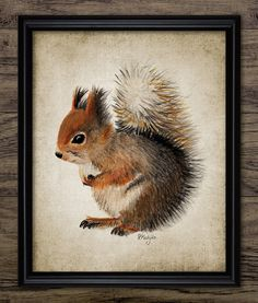 Red Squirrel Watercolor Print  Animal Painting  by InstantGraphics