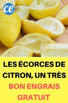 Les Écorces de Citron, un Très Bon Engrais Gratuit Pour Votre Potager.