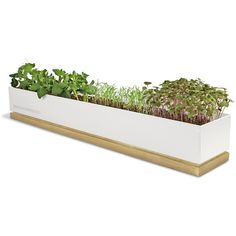Potting Shed Creations Micro Greens Grow Box - Veggie (62 AUD) ❤ liked on Polyvore featuring home, outdoors, outdoor decor, salad boxes, vegetable box, garden boxes, garden decor and outdoor sun decor