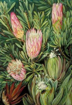 Antics of Ants among the Flowers by Marianne North; c. 1882; Oil on board; Collection: Royal Botanic Gardens, Kew, England