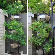 1000+ images about Urban Garden | Balcony on Pinterest ...