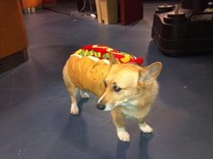 Millie's Halloween outfit... What do you think? http://www.kwch.com/news/local-news/millie-the-weather-dog-through-the-years/22215326