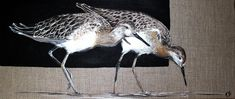 Bird Art, Birds, Images, Decoration, Nature, Small Birds, Animaux, Animal Paintings, Canvases
