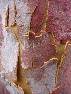 Tree Bark by Louisa Billeter Natural Forms, Natural Texture, Macro Photography, Fine Art Photography, Art Grunge, Tree Story, Patterns In Nature, Print Patterns, Purple Palette