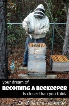 Your Dream of Becoming a Beekeeper is Closer than You Think!