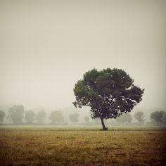 Tree in the morning by julie-rc on deviantART