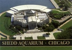 shedd aquarium Chicago If you are ever in Chicago, this is a really nice aquarium to go to.