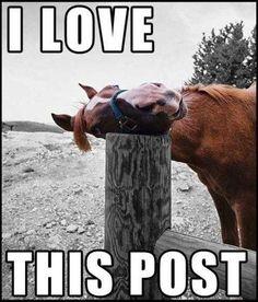hahaha silly horse