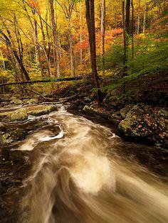 Autumn - Smokey Mountains National Park, Tennessee