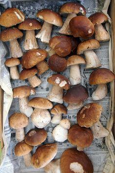 #foodporn #france #mushrooms