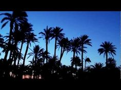Urban palm trees in Elche: ecological tourism in Elche, Spain - Official tourism website of Elche